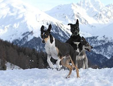 Alpen Trail2 Hans Rogg